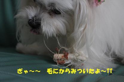 Img_0228kakou