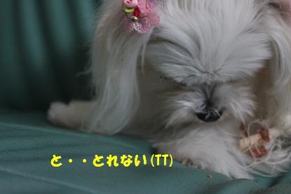 Img_0229kakou