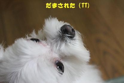 Img_2724