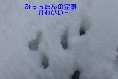 Img_3219