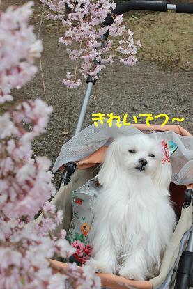 Img_4986_2