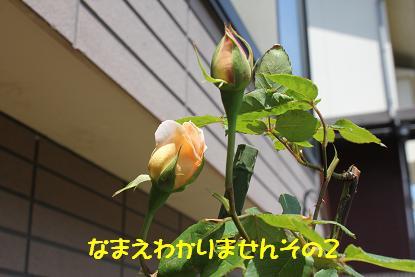 Img_6072