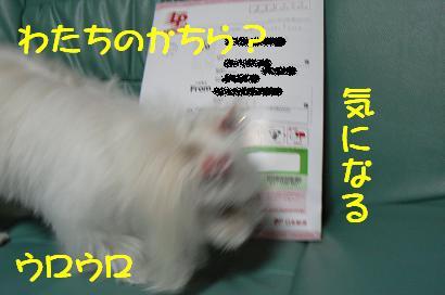 P1140547