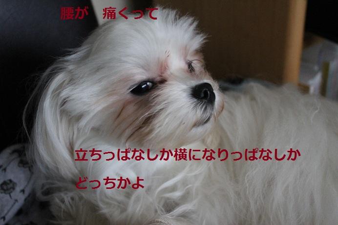 Img_9501